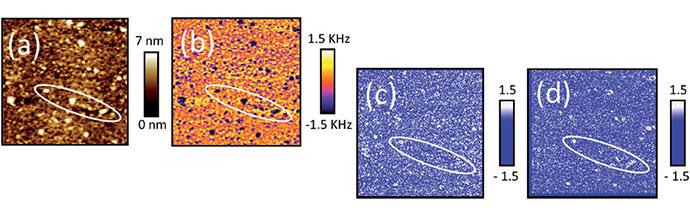 Water uptake in organic coatings using AFM-IR