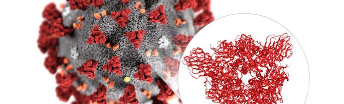 Coronavirus Mapped with Cryo-EM
