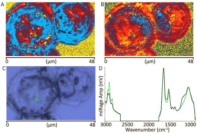 Intracellular imaging