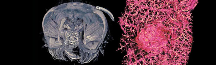 Micro-CT in Life Science & Biology