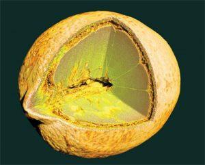 Microtomography Scan of a Lemon