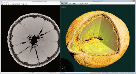 Micro-CT scan of a lemon