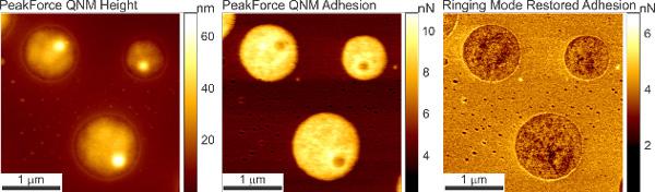 Restored Adhesion AFM Data