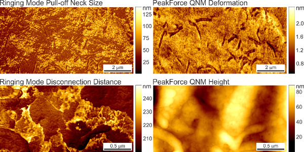 Neck Formation in Soft Matter